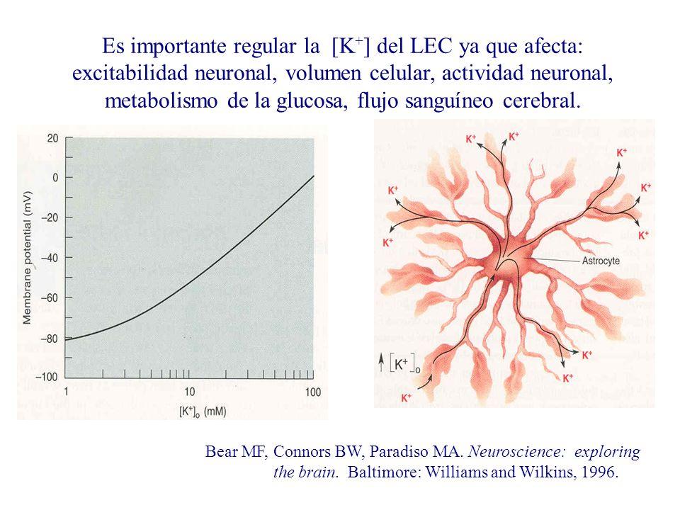 Es importante regular la [K+] del LEC ya que afecta: excitabilidad neuronal, volumen celular, actividad neuronal, metabolismo de la glucosa, flujo sanguíneo cerebral.
